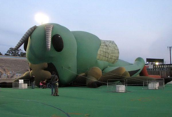 tsubaki2005.jpg